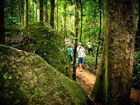 AUCAI Daintree Dreaming Day Tour with Ngadiku Dreamtime Walk POP