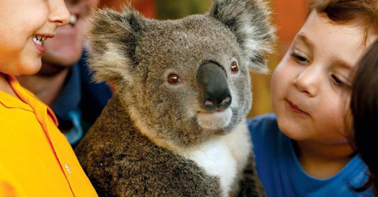 AUSYD Wildlife Sydney Koala Encounters POP