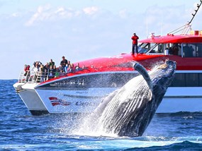 Captain Cook Whale Watching Cruise PM POP