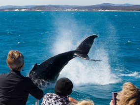AUSYD Oz Whale Watching Sydney Harbour Cruise Apr 2018 POP