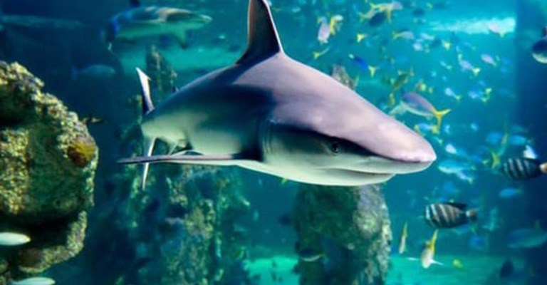 AUSYD SEA LIFE Sydney Aquarium Shark Diving Xtreme POP