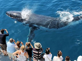 AUSYD 3 hour Fantasea Whale Watching Cruises Sydney (AM) POP