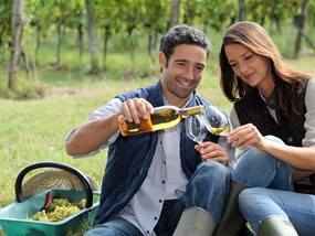Half Day Gray Line Hunter Valley Food Wine Lovers Tour With Gourmet Lunch POP