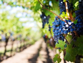 Hunter Valley Harvest Wine Experience Tour