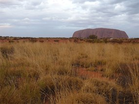 View of Uluru on Transfer