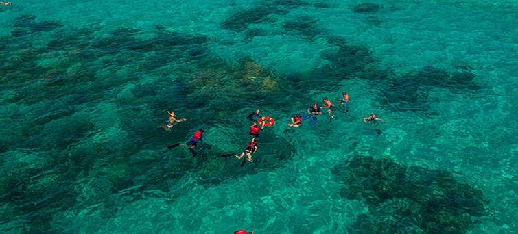 AUCNS Ocean Free Sail & Snorkel To Green Island With Optional Scuba Diving BNR3new