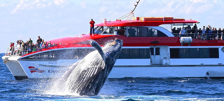 Captain Cook Whale Watching Cruise AM BNR01
