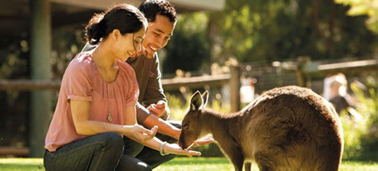 Healesville Wildlife Sanctuary Tour