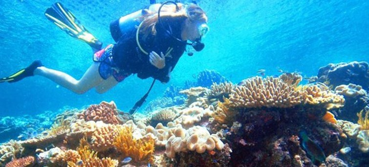 Reef Magic Under Water Discovery