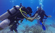 Scuba Diving Certified (Second Dive)